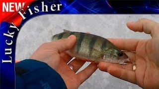 Ловля рыбы на зимнюю удочку с мормышкой l Подводные съемки