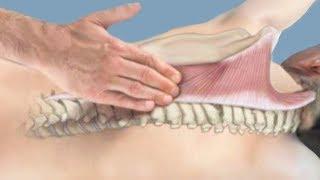 Об остеопатии и остеопатах. Остеопатическая деятельность, диплом остеопата, стандарты минздрава
