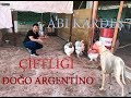 Abi Kardeş Çitfliği - Dogo Argentino