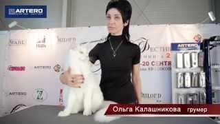 Фестиваль Груминга -2014. Ольга Калашникова. Груминг кошек