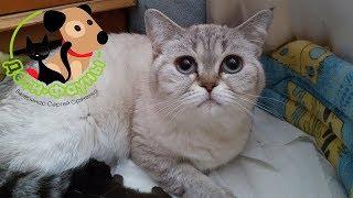 Влияние стресса на роды у кошки
