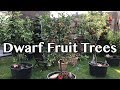 Dwarf Fruit Trees In Container, MAY 2018