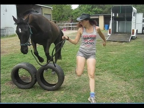 Thumbnail: Great Horse Horse Games (Trick Training & Fun)