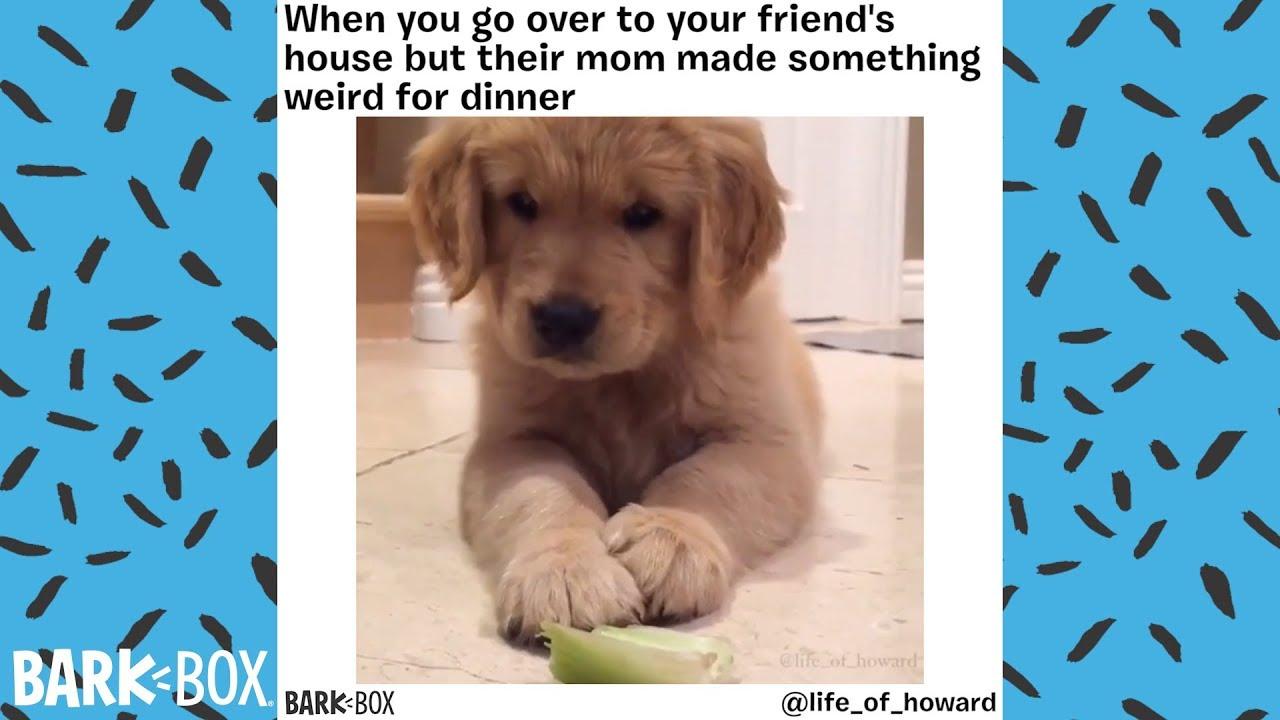 Another Funny Dog Meme Compilation Barkbox Youtube