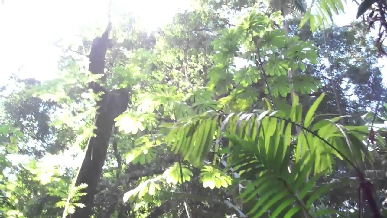 El salvador jardin botanico la laguna antiguo cuscatlan for Plantas de un jardin botanico