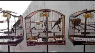 Trinca-ferro Buriti - Máquina x Zandonaide parte1