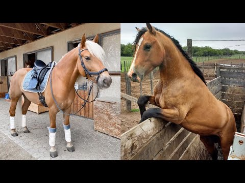 Download Horse SOO Cute! Cute And funny horse Videos Compilation cute moment #21