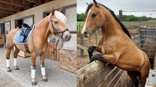 Horse SOO Cute! Cute And funny horse Videos Compilation cute moment #21