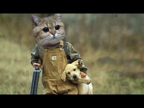 Funny Cats and Dogs Vines || FunnyVines