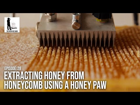 "Extracting Honey from Honeycomb using a Honey Paw -  Episode 28: ""Sticky Paws"""
