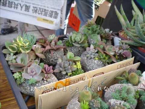 101 台灣大學農場多肉植物主題展