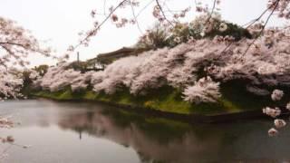 中島美嘉さんの『桜色舞うころ』を清木場君風味で 歌わせていただきまし...