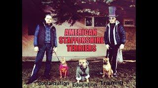 СТАФФОРД (социализация, воспитание и обучение)