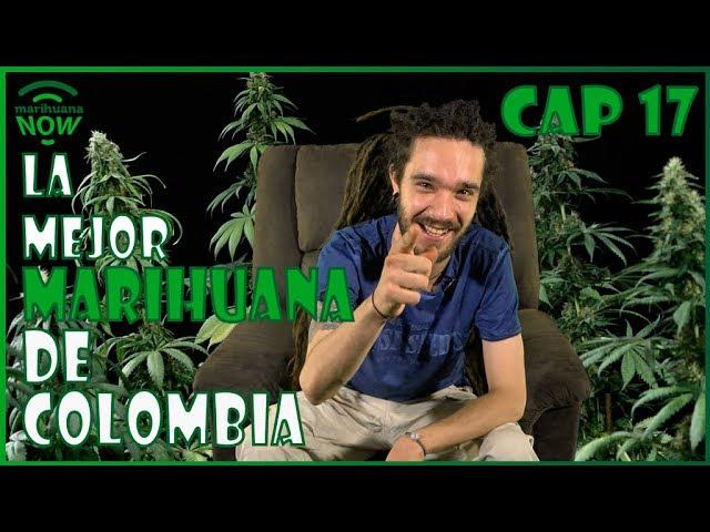 La mejor MARIHUANA de COLOMBIA: Copa Cannábica EL COPO 2017. Holidays Cannabis Cup. Now 17