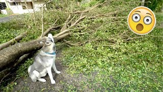 Husky REACTS to the Hurricane Damage! Gohan During/After The Storm!