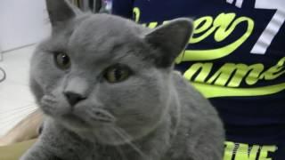Гирокарт с котом Скутером. Гироскутеры в Краснодаре