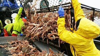 Awesome Snow Crab Fishing On The Sea, Big Catch King Crab Trap Under Deep Sea thumbnail