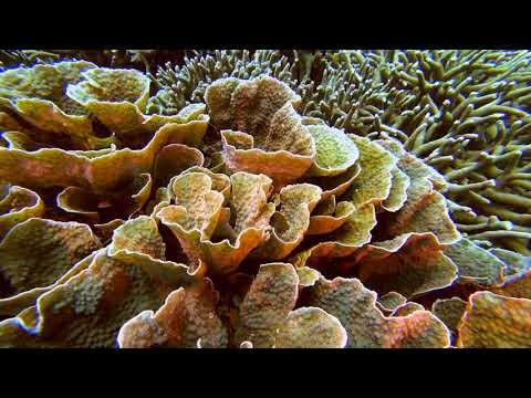 Philippines Apo Island Diving Part2 Paul Ranky 4K UHD H264 Video