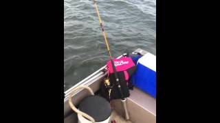 Humpback whale Breaches then drags 16' Aluminum Boat almost capsizing it