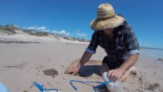 Bungum worming or beach worming