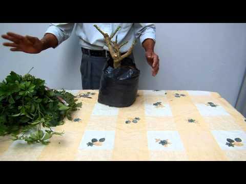 El Jardinero En Casa Chefleras Funnycat Tv