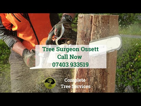 Tree Surgeon Ossett WF5 Stump Root And Tree Removal Pruning And Felling Tree Surgeon Near Me