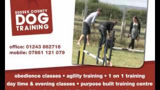 Sussex County Dog Training 02.wmv