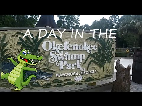 A Day in the Okefenokee Swamp
