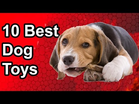 10-best-toys-for-dogs---the-best-dog-toy-in-2019