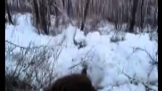 Медведь растерзал охотника