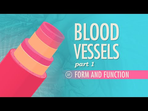 Blood Vessels, part 1 - Form and Function: Crash Course A&P #27