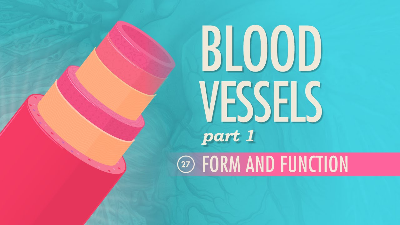 Blood Vessels, part 1 - Form and Function: Crash Course A&P #27 ...