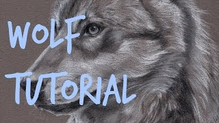 How to Draw Wolf Fur