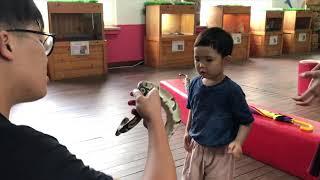 4살 아기 파이톤 뱀만지기 파충류 체험