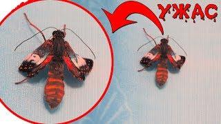 БАБОЧКА МУТАНТ ИЗ КОКОНА! Ферма бабочек Домашний бабочкарий