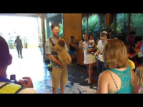 Live Sloth @ Discovery Cove 2016 (trainer brings out a Sloth)