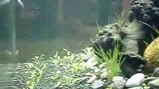 My Freshwater 25l Nano Aquarium Pt 2
