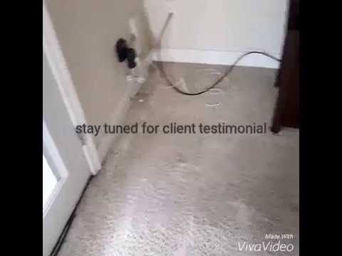How To Clean Dirty Carpets Apartment Carpet Cleaning In Woodbridge