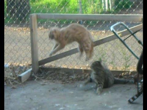 Greatest Cat Fight EVER   Catfight Round 1  ***Fur Flying Frenzie***