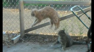 Greatest Cat Fight EVER   Catfight Round 1  ***Fur Flying Frenzie***