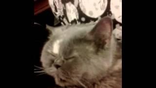 The snoring cat