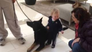 Trained Protection Dogs With Children Protectiondogsales.com