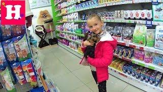 САЛОН КРАСОТЫ ДЛЯ МАЙКЛА 🐶 Секреты ухода за йорком / Beauty saloon for Dog / Yorkshire Terrier