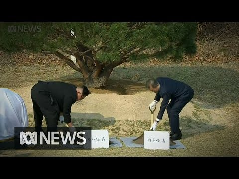 South and North Korean leaders plant tree for peace