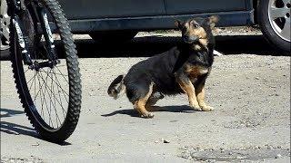 Бездомная собака приставала к прохожим, пока они не поймут