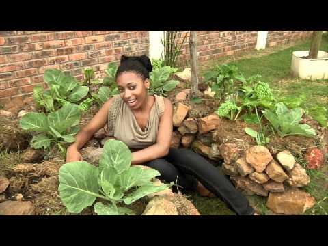 Umthati organic gardens