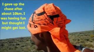 Persistence hunting wild antelope through the Red Desert Wyoming