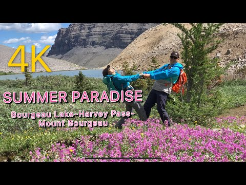 One Day in Summer Paradise, Bourgeau Lake-Harvey Pass-Mount Bourgeau, Banff National Park