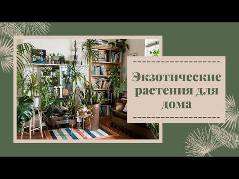 🌼Экзотические растения для дома