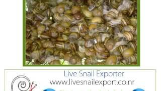eleveur producteur l'exportation l'escargot la Chine